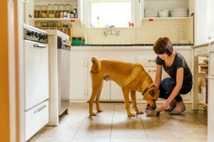 Cuidados de perros en casa