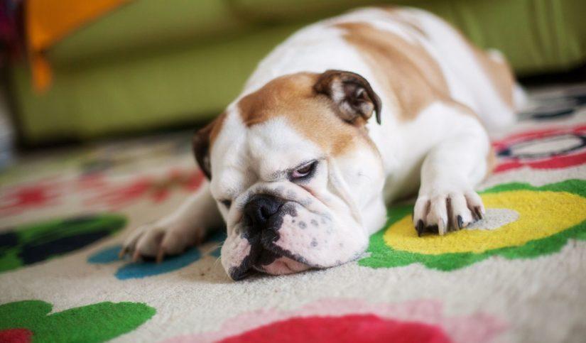 Qué hacer ante una negligencia veterinaria