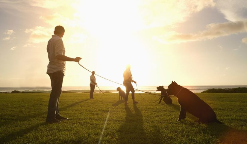 Cómo educar a un perro potencialmente peligroso