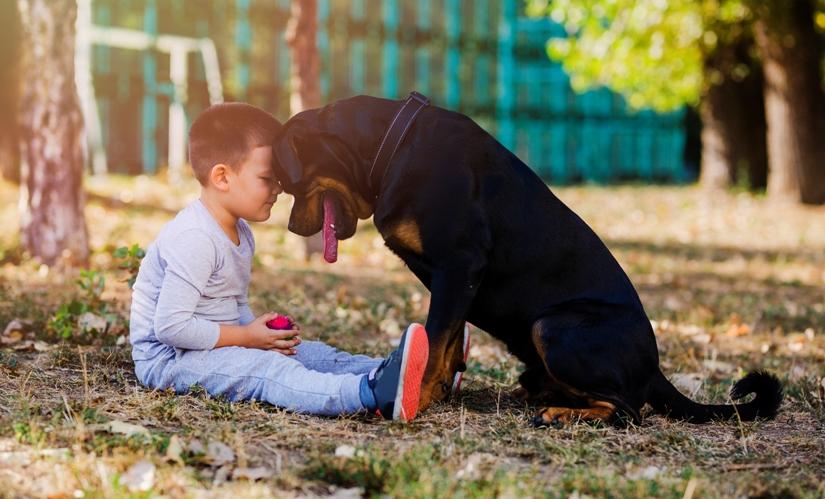 Claves para educar a una mascota