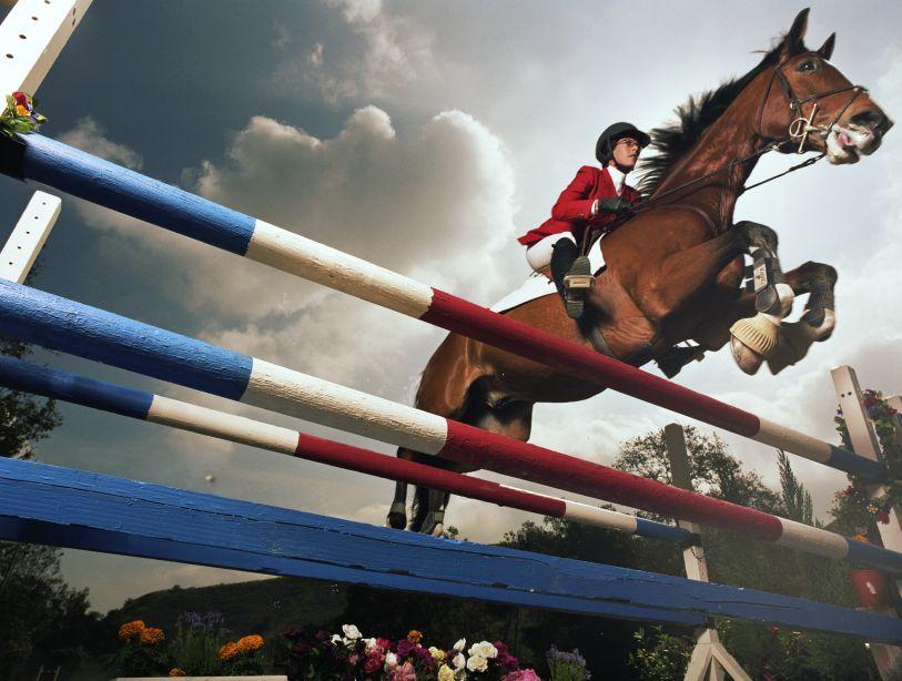 caballos en el salto de hípica