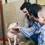 importancia de la adopción de perros